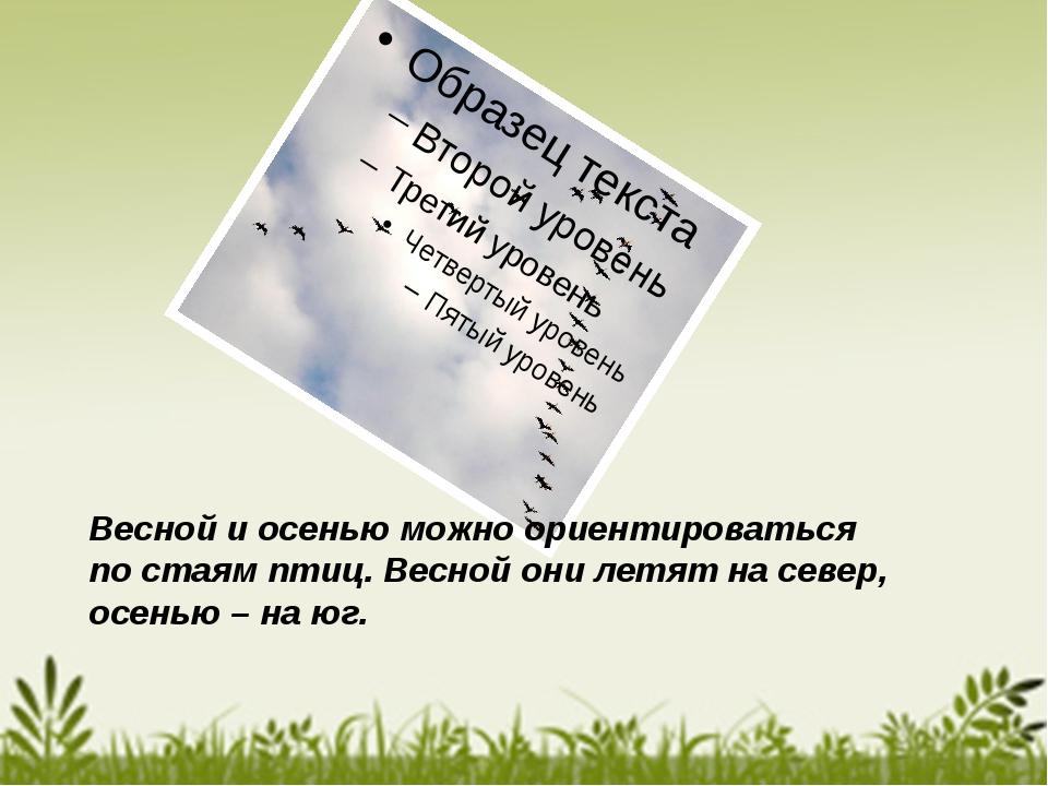 Весной и осенью можно ориентироваться по стаям птиц. Весной они летят на сев...