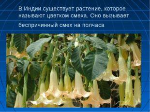 В Индии существует растение, которое называют цветком смеха. Оно вызывает бес