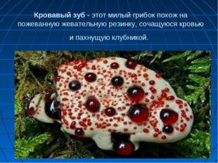 Кровавый зуб - этот милый грибок похож на пожеванную жевательную резинку, соч