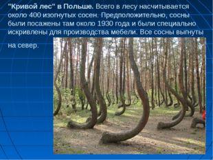 """""""Кривой лес"""" в Польше. Всего в лесу насчитывается около 400 изогнутых сосен."""