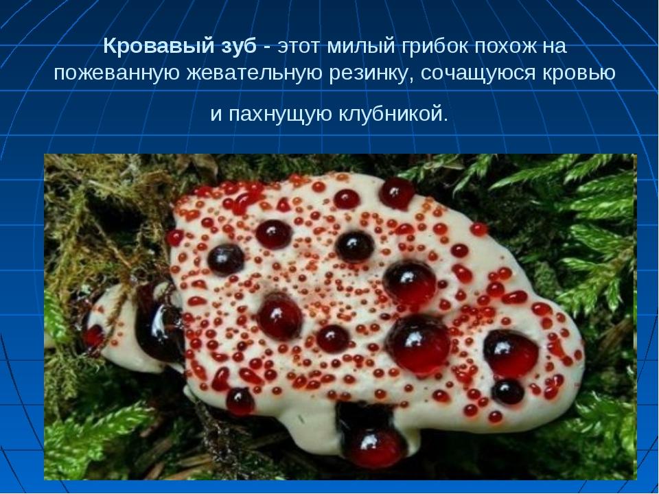 Кровавый зуб - этот милый грибок похож на пожеванную жевательную резинку, соч...