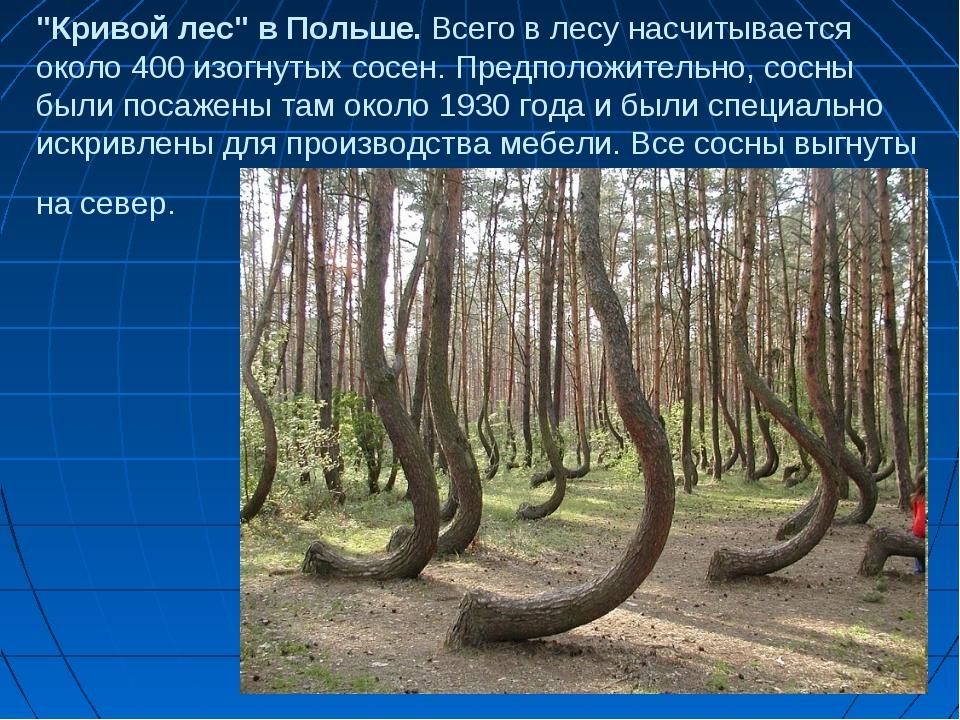 """""""Кривой лес"""" в Польше. Всего в лесу насчитывается около 400 изогнутых сосен...."""