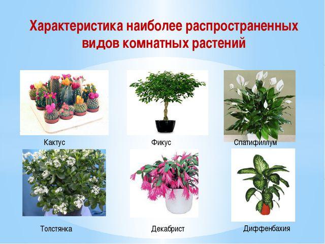 Характеристика наиболее распространенных видов комнатных растений Кактус Фику...