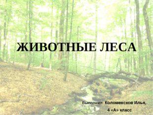 ЖИВОТНЫЕ ЛЕСА Выполнил: Коломенсков Илья, 4 «А» класс