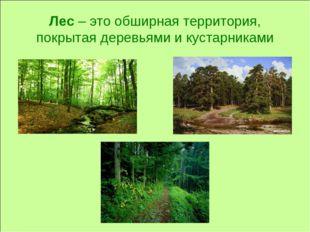 Лес – это обширная территория, покрытая деревьями и кустарниками