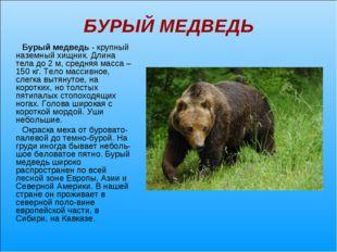 БУРЫЙ МЕДВЕДЬ Бурый медведь - крупный наземный хищник. Длина тела до 2 м, сре
