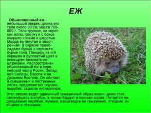 ЕЖ Обыкновенный еж - небольшой зверек, длина его тела около 30 см, масса 700-