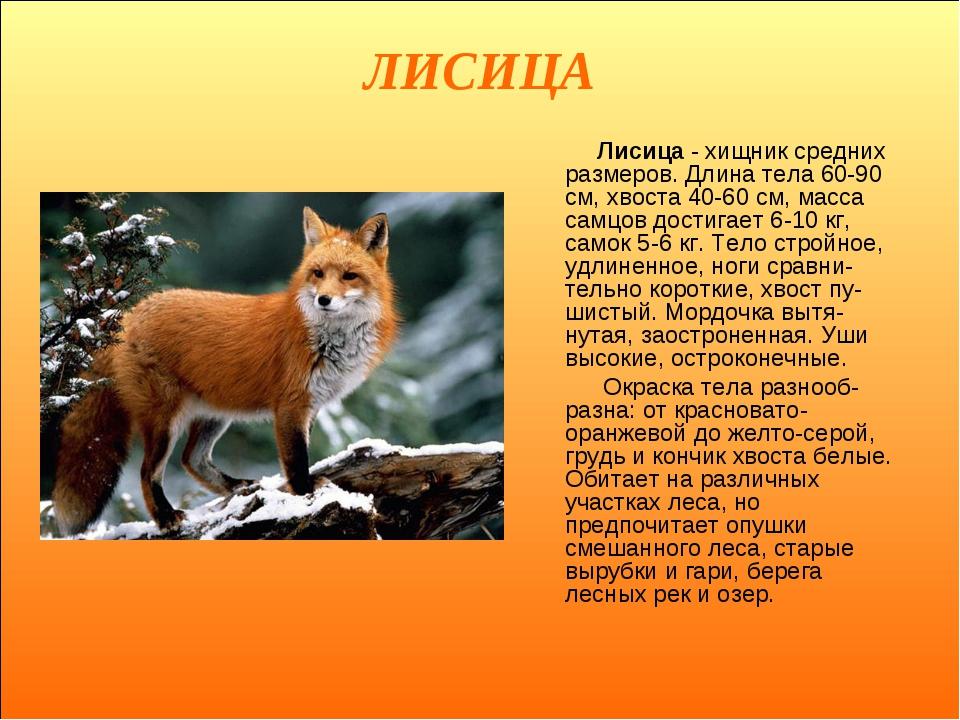 ЛИСИЦА Лисица - хищник средних размеров. Длина тела 60-90 см, хвоста 40-60 см...