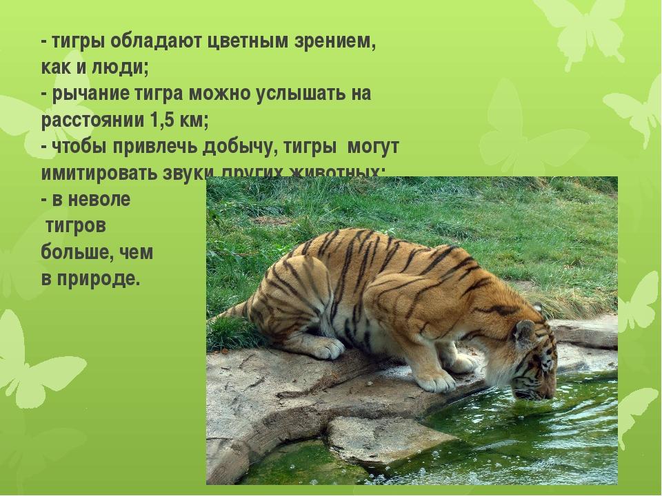 - тигры обладают цветным зрением, как и люди; - рычание тигра можно услышать...