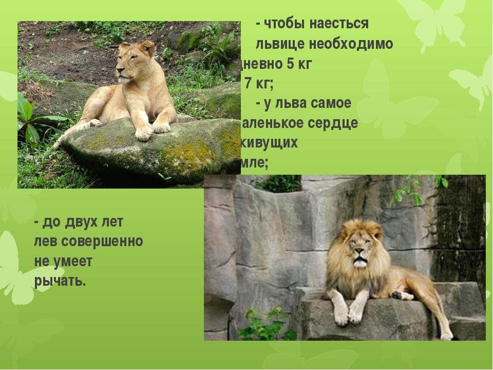 - чтобы наесться львице необ...