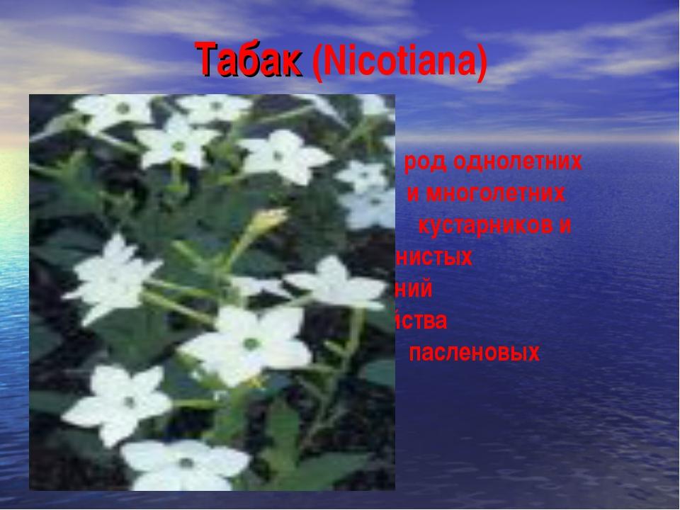 Табак (Nicotiana) род однолетних и многолетних кустарников и травянистых раст...
