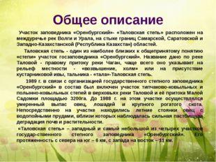 Общее описание Участок заповедника «Оренбургский»- «Таловская степь» располож