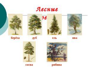 Лесные деревья. берёза дуб ель ива сосна рябина