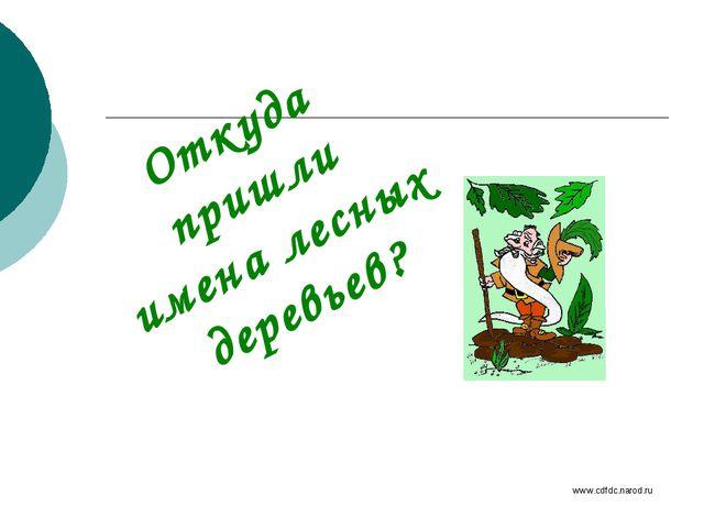 Откуда пришли имена лесных деревьев? www.cdfdc.narod.ru