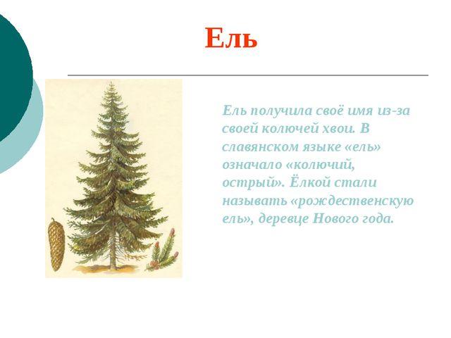 Ель Ель получила своё имя из-за своей колючей хвои. В славянском языке «ель»...
