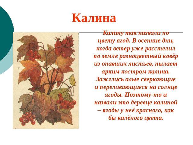 Калина Калину так назвали по цвету ягод. В осенние дни, когда ветер уже расст...