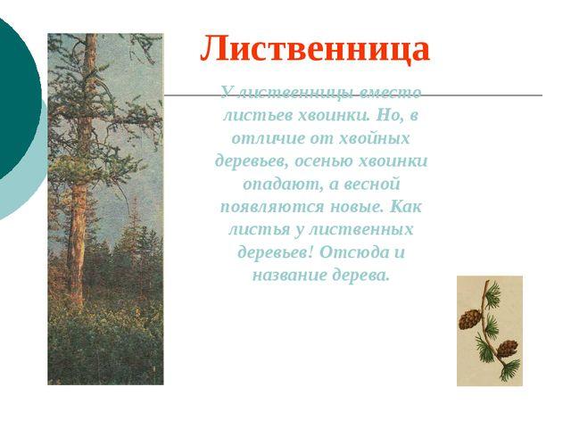 Лиственница У лиственницы вместо листьев хвоинки. Но, в отличие от хвойных де...