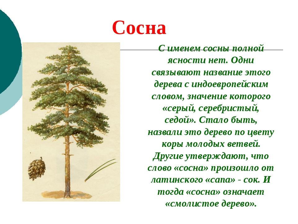 Сосна С именем сосны полной ясности нет. Одни связывают название этого дерева...
