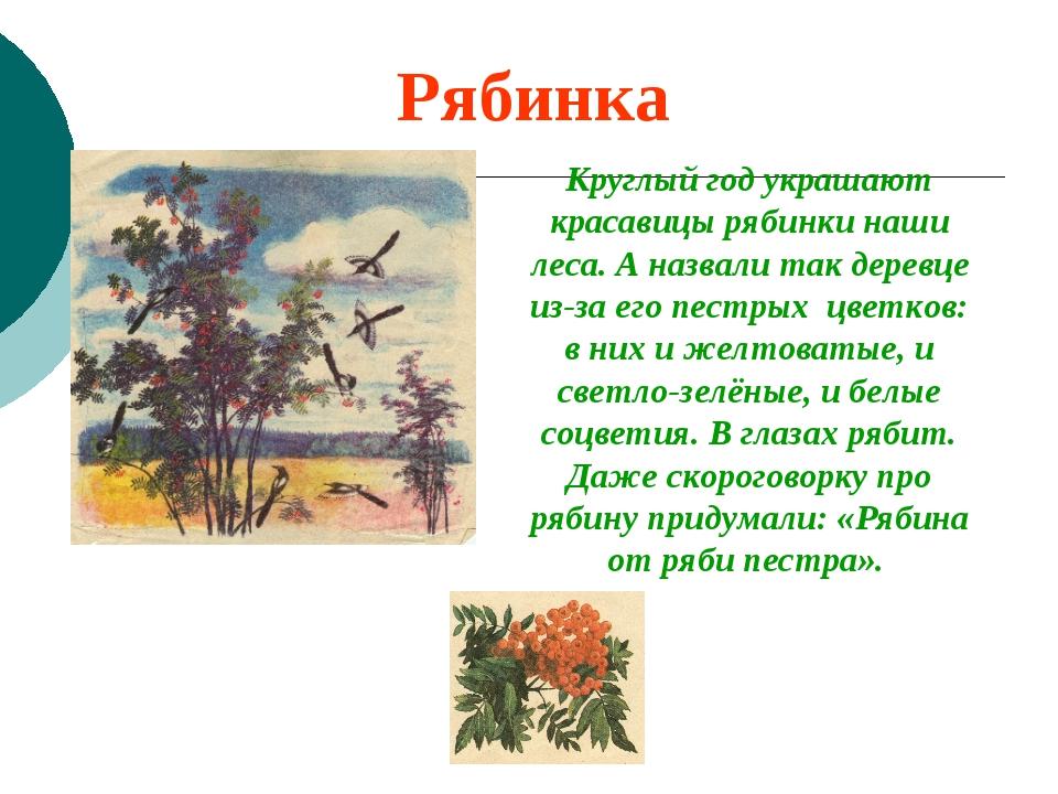 Рябинка Круглый год украшают красавицы рябинки наши леса. А назвали так дерев...