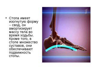 Стопа имеет изогнутую форму – свод, он амортизирует массу тела во время ходьб