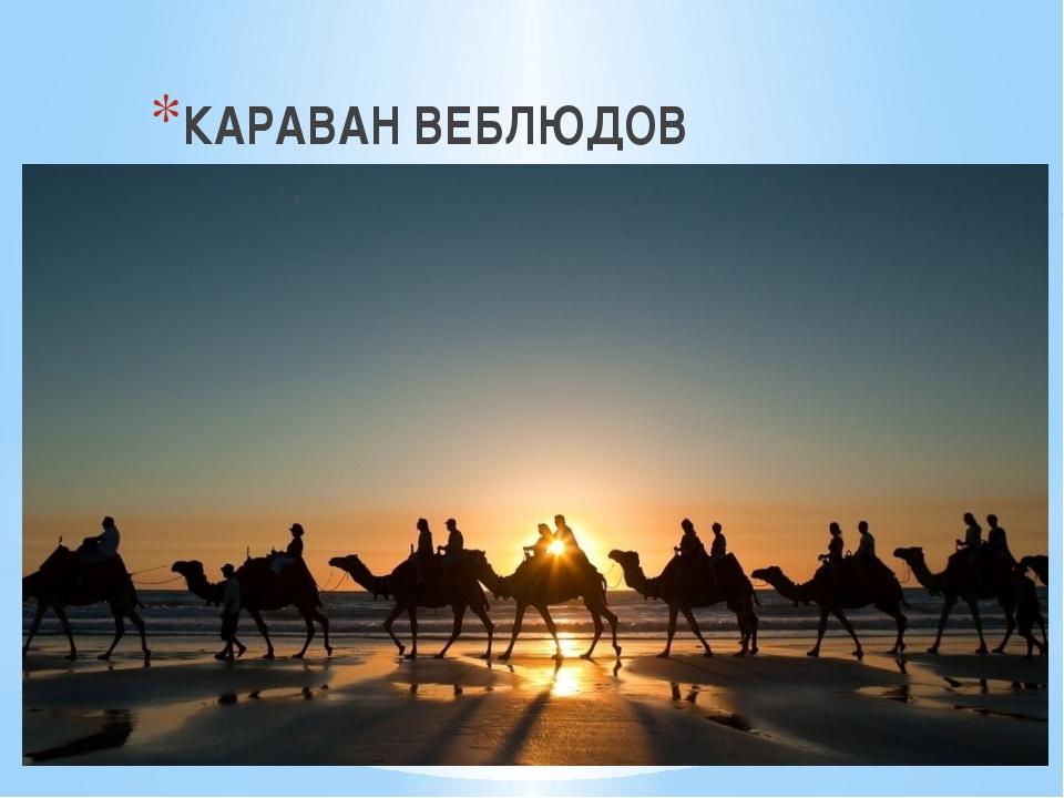 КАРАВАН ВЕБЛЮДОВ
