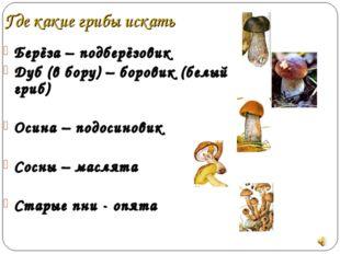 Где какие грибы искать Берёза – подберёзовик Дуб (в бору) – боровик (белый гр