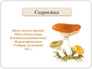 Вдоль лесных дорожек Много белых ножек В шляпках разноцветных, Издали приметн