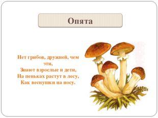 Нет грибов, дружней, чем эти, Знают взрослые и дети, На пеньках растут в лесу