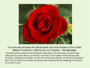 The rose was declared the official flower and floral emblem of the United Sta