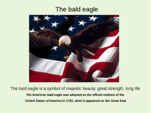 The bald eagle The American bald eagle was adopted as the official emblem of