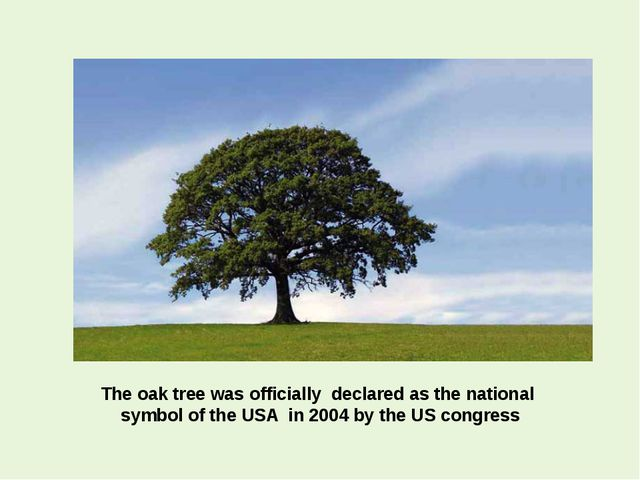 The oak tree was officially declared as the national symbol of the USA in 200...