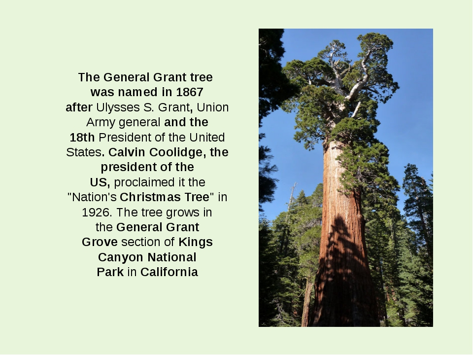 The General Grant tree was named in 1867 after Ulysses S. Grant, Union Army g...