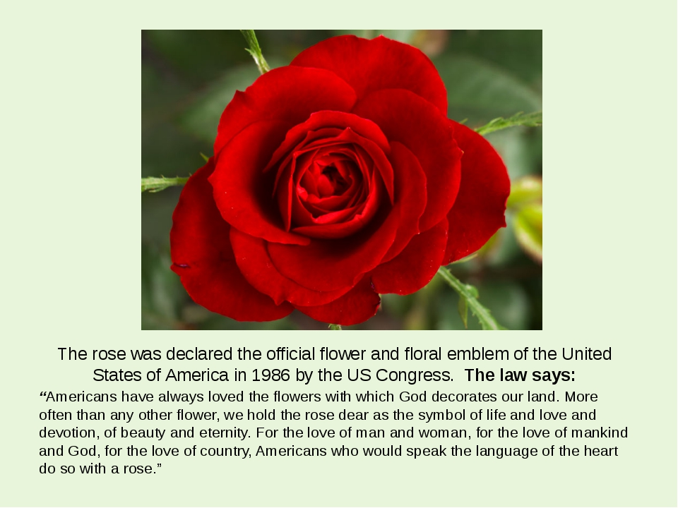 The rose was declared the official flower and floral emblem of the United Sta...