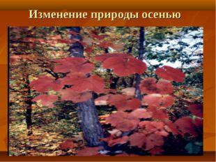 Изменение природы осенью