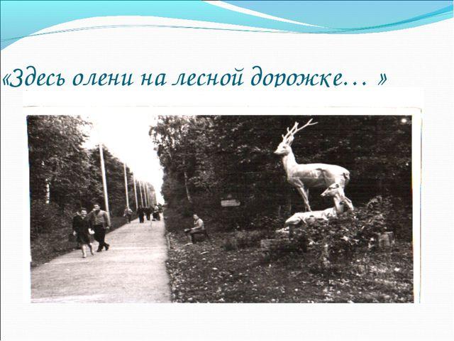 «Здесь олени на лесной дорожке… »
