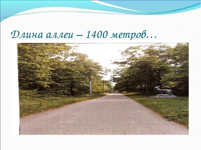 Длина аллеи – 1400 метров…