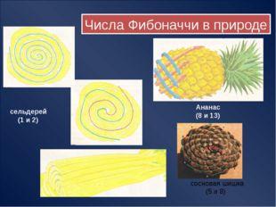 Семена в подсолнухе растут по спиралям одновременно по и против часовой стре