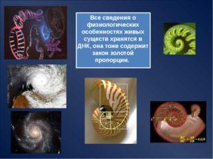 МОРСКАЯ ЧЕРЕПАХА 5 пластин в центре 8 – по краям 21 – на периферийной кайме