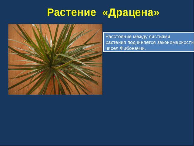 Ананас Колючки у ананаса упорядочены в несколько спиралей в двух направления...