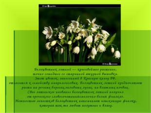 Белоцветник летний — красивейшее растение, точно сошедшее со старинной ажурно