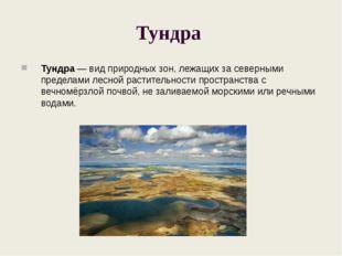 Тундра Тундра — вид природных зон, лежащих за северными пределами лесной раст