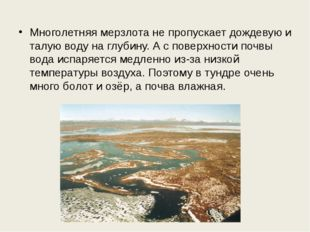 Многолетняя мерзлота не пропускает дождевую и талую воду на глубину. А с пове