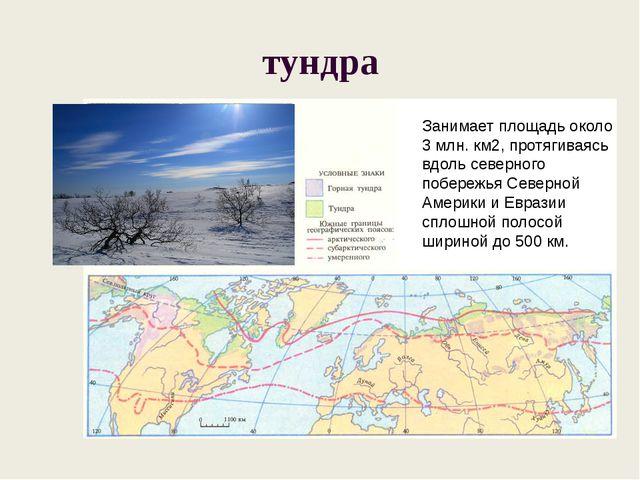 тундра Занимает площадь около 3 млн. км2, протягиваясь вдоль северного побере...