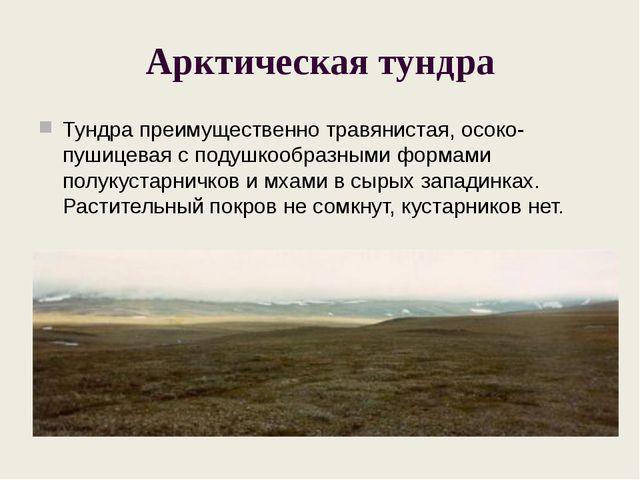 Арктическая тундра Тундра преимущественно травянистая, осоко-пушицевая с поду...