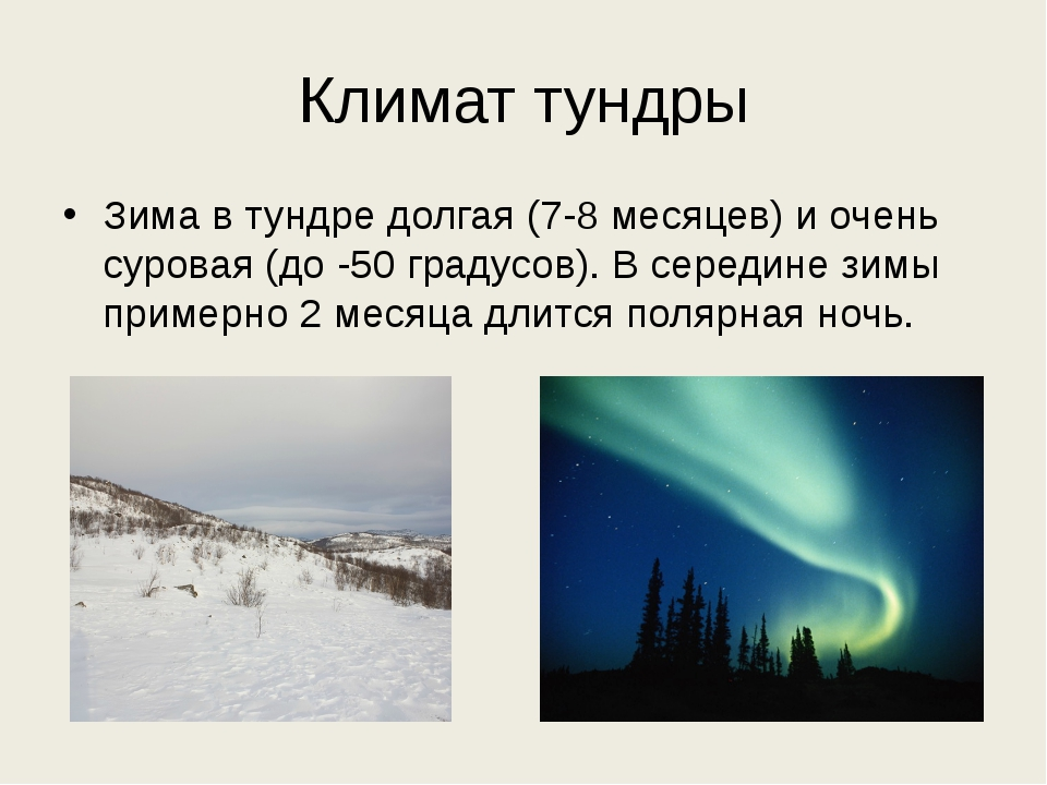 Климат тундры Зима в тундре долгая (7-8 месяцев) и очень суровая (до -50 град...