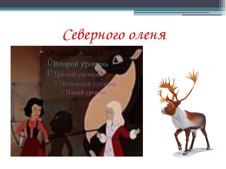 Долгова Елена Павловна Северного оленя