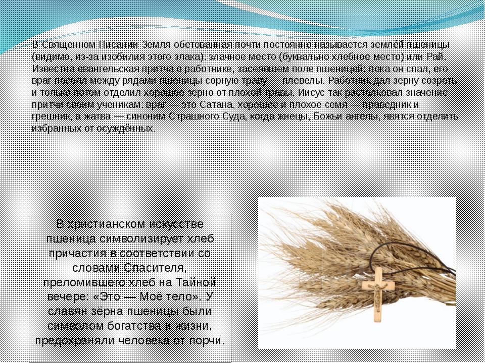 В Священном Писании Земля обетованная почти постоянно называется землёй пшени...