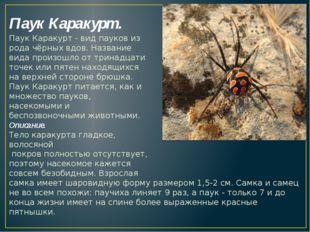 Паук Каракурт. Паук Каракурт - видпауковиз родачёрных вдов. Название вида