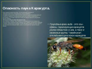 Опасность паука Каракурта. Паук Каракурт опасен своим ядом. По биохимическому