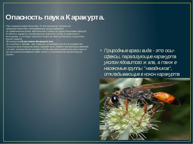 Опасность паука Каракурта. Паук Каракурт опасен своим ядом. По биохимическому...